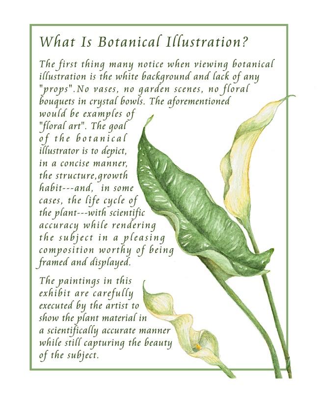 botanicaldefinition